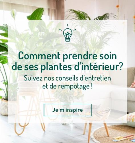 Comment prendre soin de ses plantes d'intérieur ?