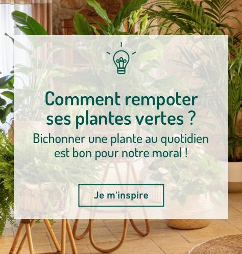 Comment rempoter ses plantes vertes ?