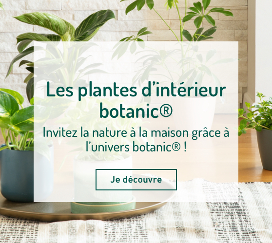 Edito_les-plantes-d-interieur