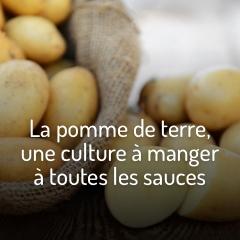 culture-facile-pomme-de-terre