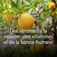 des-agrumes-a-la-maison-un-zeste-de-vitamines-et-de-bonne-humeur