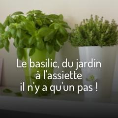 le-basilic-du-jardin-a-l-assiette-il-n-y-a-qu-un-pas