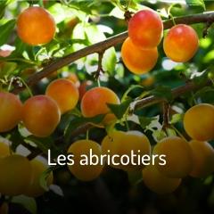 les-abricotiers