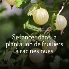 les-fruitiers-a-racines-nues