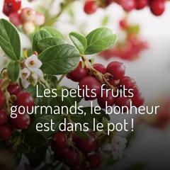 les-petits-fruits-gourmands-le-bonheur-est-dans-le-pot