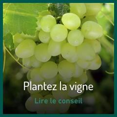 plantez-la-vigne