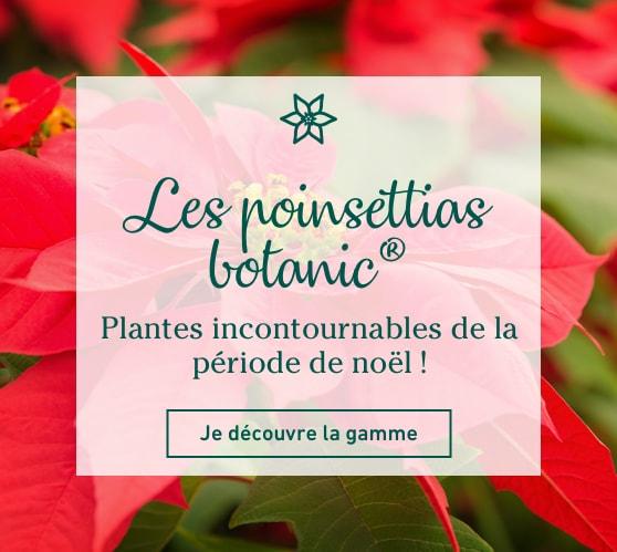 Edito_les-poinsettias-botanic