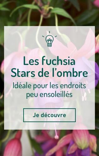 Les fuchsia - Stars de l'ombre