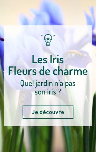 Les Iris - Fleurs de charme