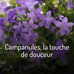 campanules-la-touche-de-douceur