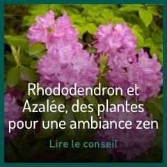 conseils-azalees-et-rhododendron-botanic