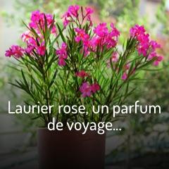 laurier-rose-un-parfum-de-voyage