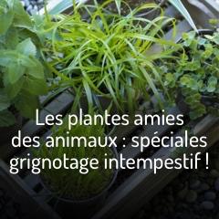les-plantes-amies-des-animaux