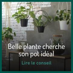 belle-plante-cherche-son-pot-ideal