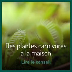des-plantes-carnivores-a-la-maison