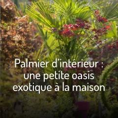 les-palmiers-d-interieur