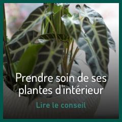 prendre-soin-de-ses-plantes-d-interieur