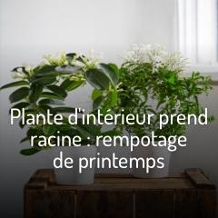 rempoter-les-plantes-vertes