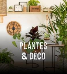 Plantes & déco