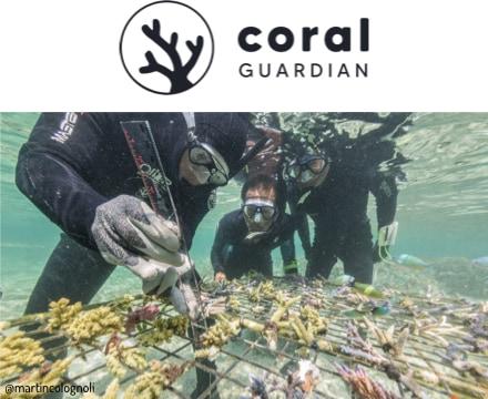 plongeurs étudiant du corail