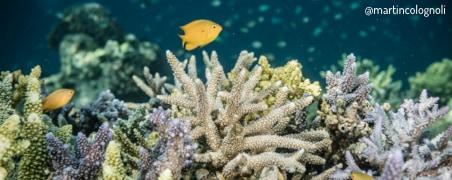 Récif de corail coloré