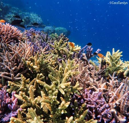 récif de corail restauré