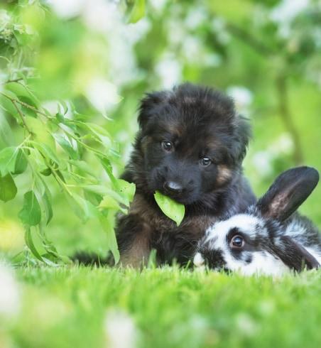 chiot et lapin