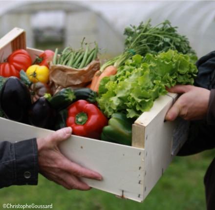 caisse de légumes