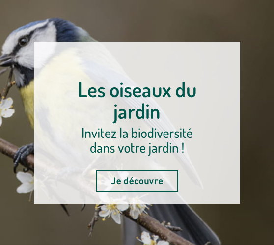 Edito_oiseaux-du-jardin