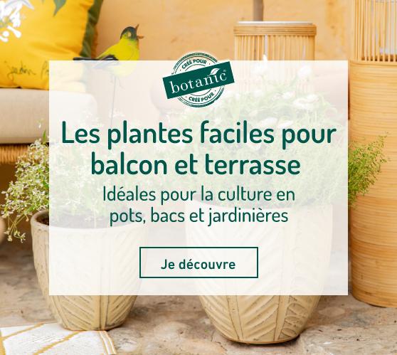 Edito_plantes-faciles-balcon-terrasse-botanic