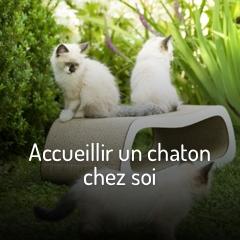 accueillir-un-chaton-chez-soi