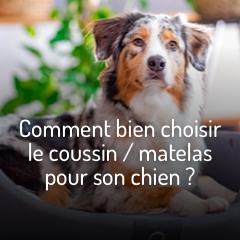 bien-choisir-le-coussin-pour-son-chien