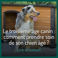 comment-prendre-soin-de-son-chien-age
