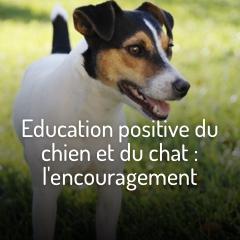 education-positive-chien-chat