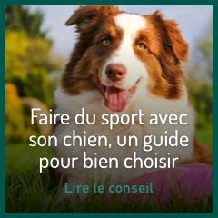 faire-du-sport-avec-son-chien
