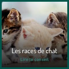 les-races-de-chat