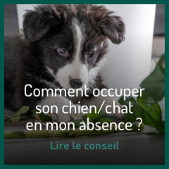 occuper-son-chien-chat-pendant-absence