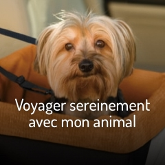 voyager-avec-mon-animal