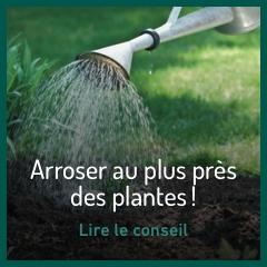 arroser-au-plus-pres-de-ses-plantes