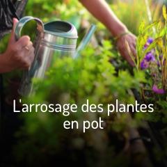 arroser-facilement-mes-plantes-sur-mon-balcon-et-ma-terrasse
