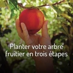 comment-planter-votre-arbre-fruitier