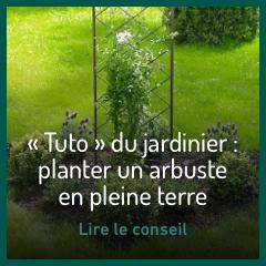 planter-un-arbuste-en-pleine-terre