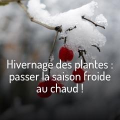 preparez-vos-plantes-a-l-hiver