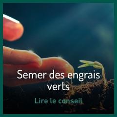 semer-des-engrais-verts