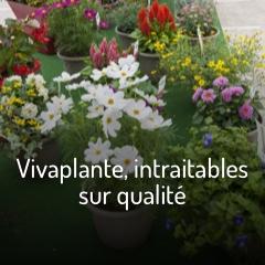 vivaplante-intraitables-sur-qualite