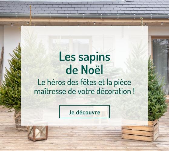 Edito_sapins-de-noel