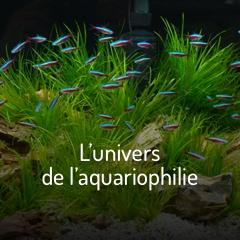 L'univers de l'aquariophilie