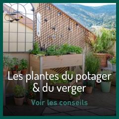 Les plantes du potager & du verger