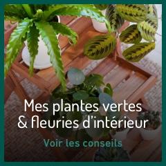 Mes plantes vertes & fleuries d'intérieur