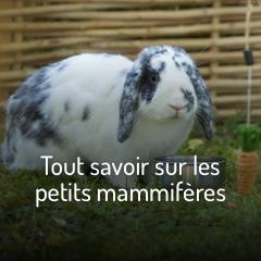 Tout savoir sur les petits mammifères